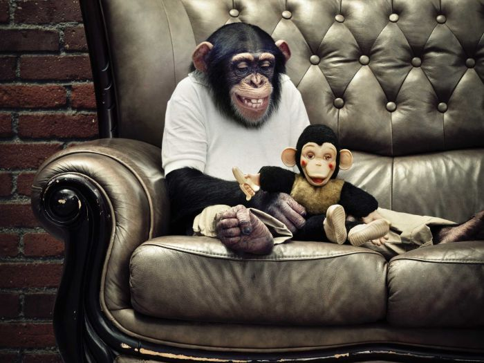 Chimp with toy monkey