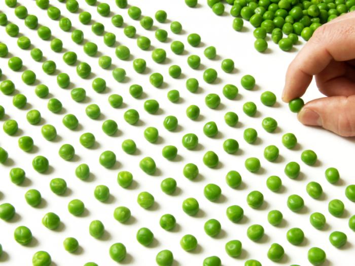 Person compulsively lining up peas into rows.