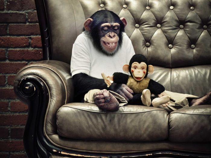 Chimp with toy monkey